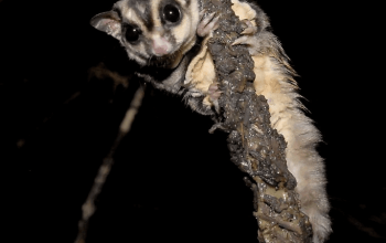 Sugar Gliders with Incense, Candles, Colognes & Scented Soaps; New Toys for Solid Roof Cages; Staying on Top of Product Safety