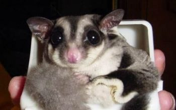 Possum Blend Milk Replacer; Are the canned bugs alive?; What's the difference between exotic animals and regular animals?; Giving Pets as Holiday Gifts